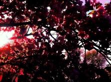 All blossum